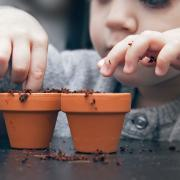 child planting seed in pot