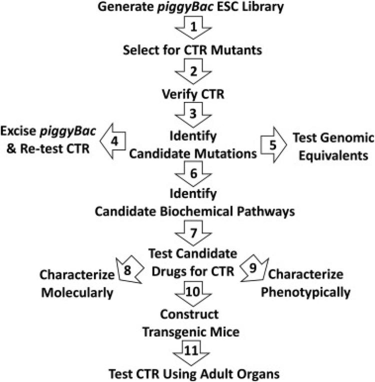 Overview of strategy for identifying and studying CTR mutants,