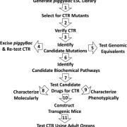 Overview of strategy for identifying and studying CTR mutants.