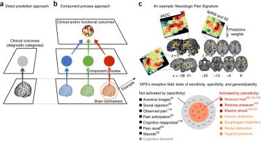 brain models in translational neuroimaging""