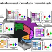 Regional assessment of generalizable representations in MFC