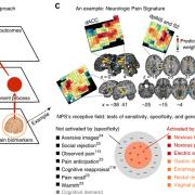 "Figure describing future directions of research in article ""Building better biomarkers: brain models in translational neuroimaging"""