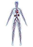 DeSouza lab logo showing cardiovascular system