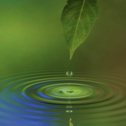 A leaf dropping water on to a pond