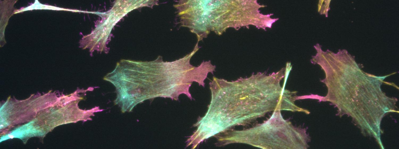 MicroscopeImage_Cells