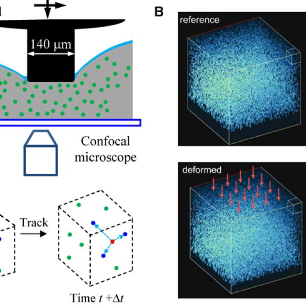 3D Micromechanics research to study the strain field during micro-pillar indentation