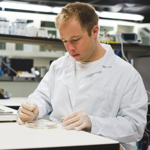 Eric Kramer dissecting tissue.
