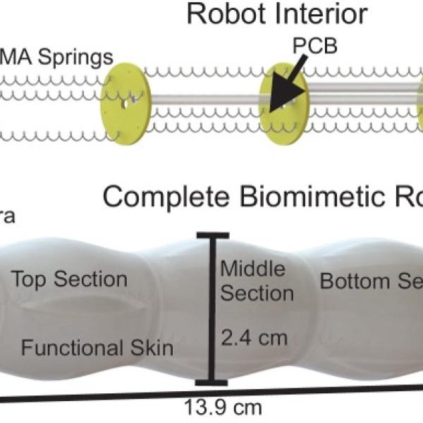 SMA-Actuated robotic endoscope with force air convective cooling