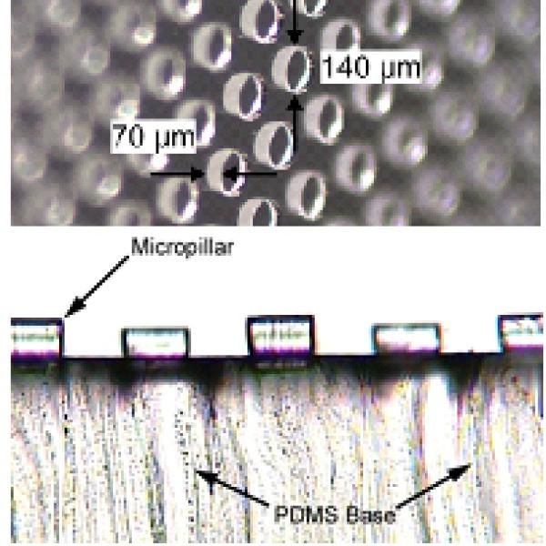 Micro-patterned PDMS pillars designed to maximize traction in vivo
