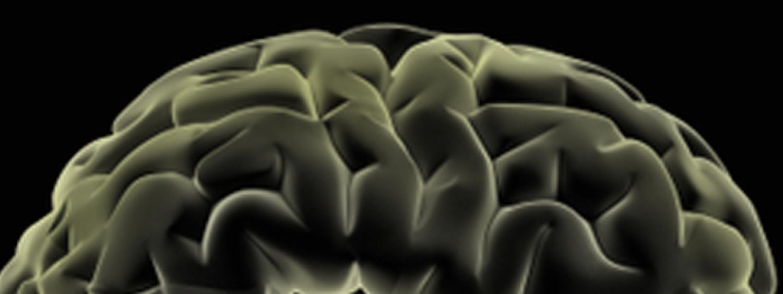 A brain on the horizon