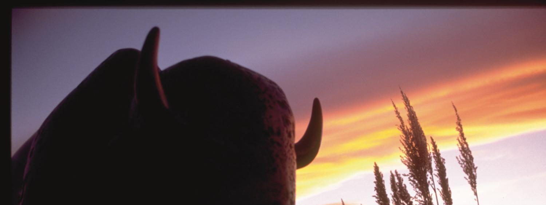 Buffalo sculpture on the CU Boulder campus