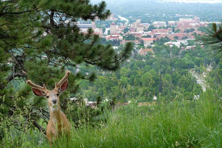 Study at CU Boulder