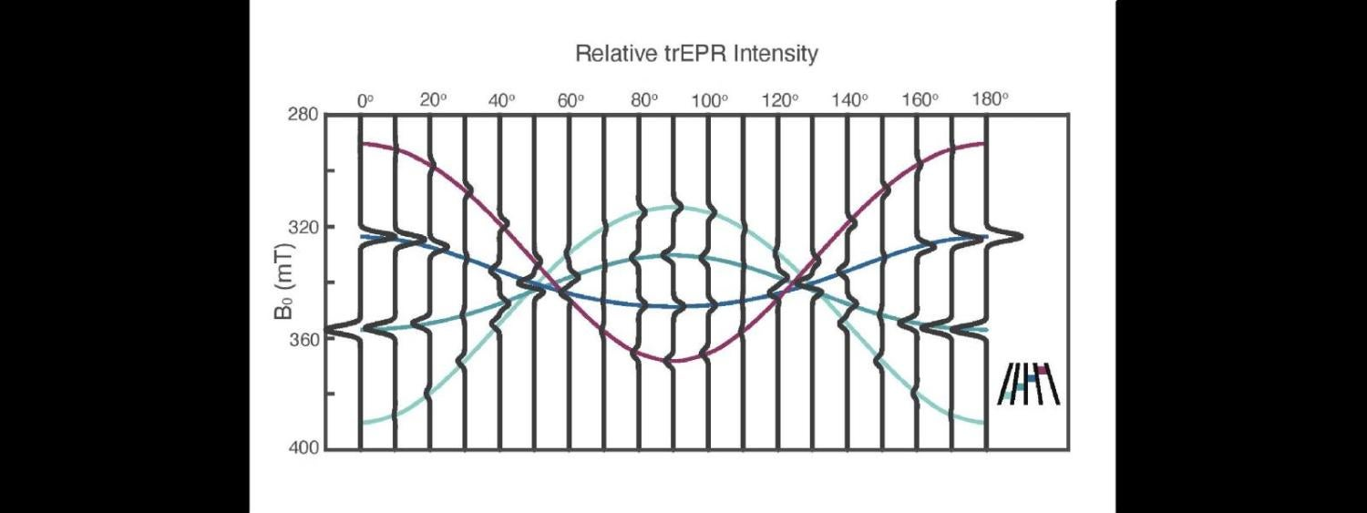 Calculated prompt ^5TT EPR spectra for parallel singlet fission chromophores rotated with respect to the static field