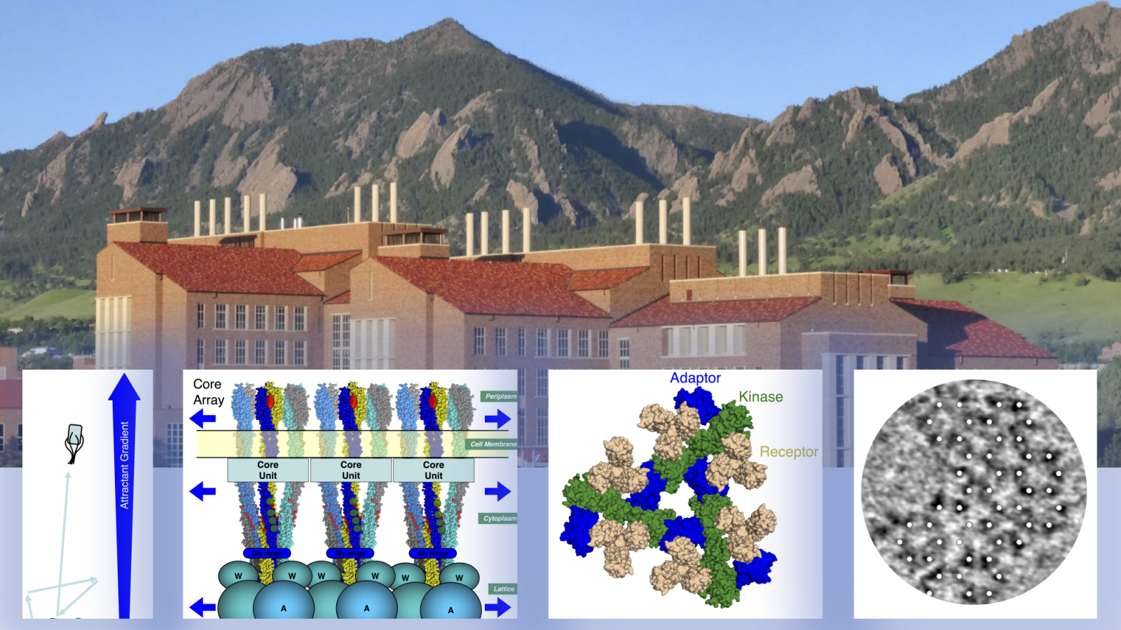 A mountain scene, with images of a bacterial cell, and three views of a receptor array