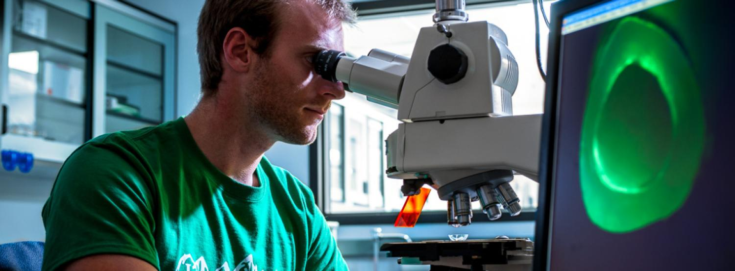 A male student looking into a microscope