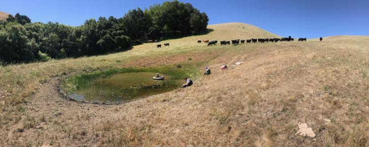 California wetlands, Johnson Lab, NSF