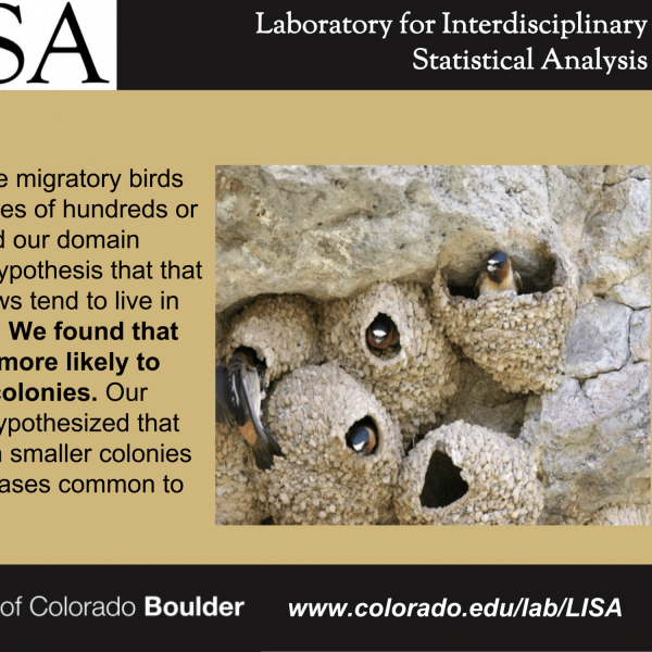 Colony habits of cliff swallows