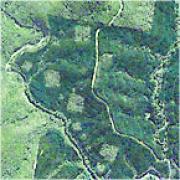 wog wog habitat loss map