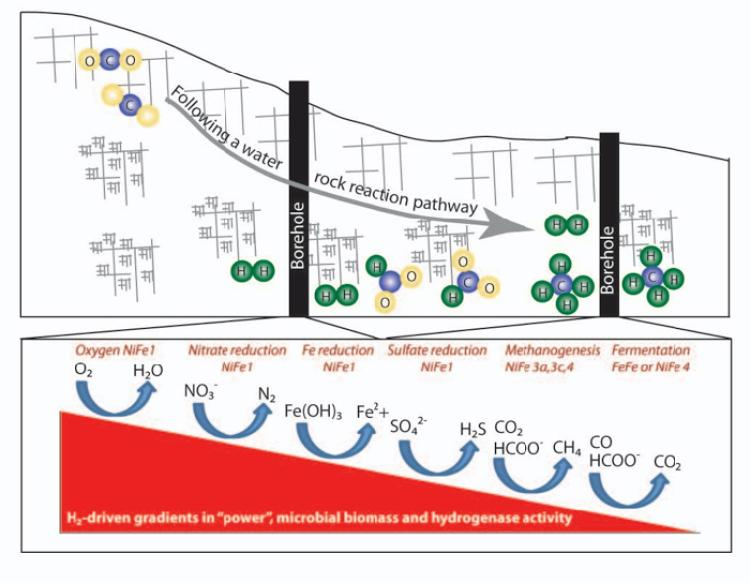 Figure 1. Schematic representing opportunities in Oman to utilize a borehole observatory aligned along a water-rock reaction flow path to measure progressive changes in disequilibrium, rates of production and consumption of energy sources, associated changes in aqueous and solid phase geochemistry, and changes in the activities of key enzymes as power and habitability vary.