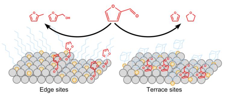 Different SAM molecules favoring edge sites vs. lattice sites