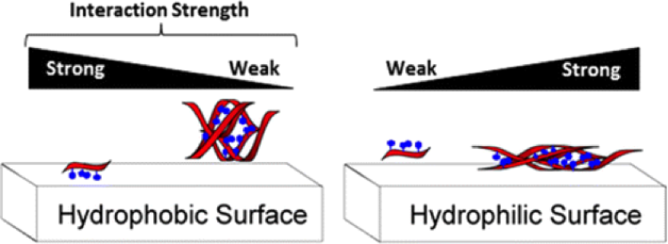 As hydrophilicity of the surface increases, there are more interactions with the diesterphosphate DNA backbone. Likewise, on more hydrophobic surfaces, there are more interactions with the hydrophobic aromatic bases.
