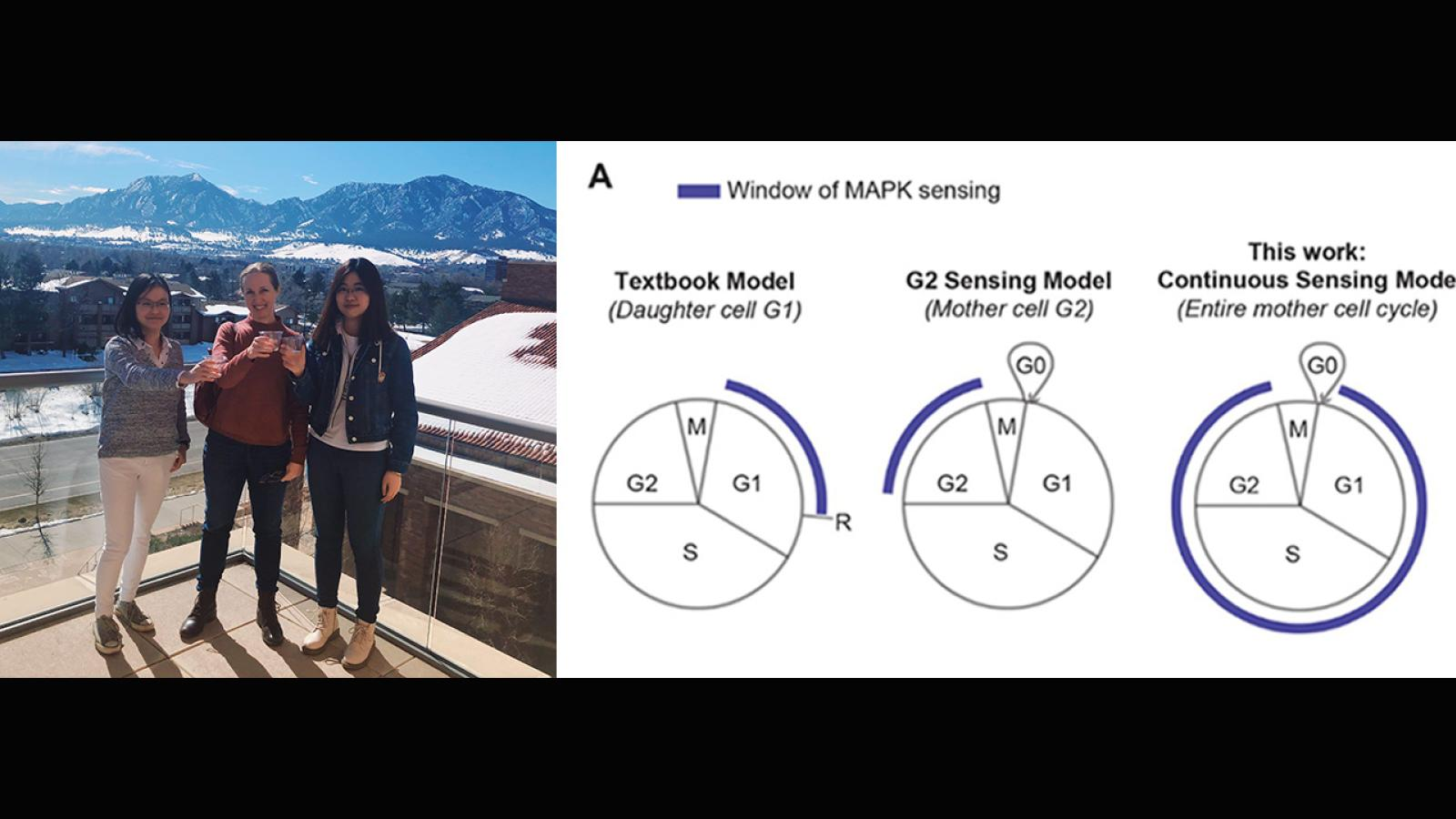"""Celebrating the acceptance of Mingwei's paper, """"Temporal integration of mitogen history in mother cells controls proliferation of daughter cells,"""" to Science, published April 2."""