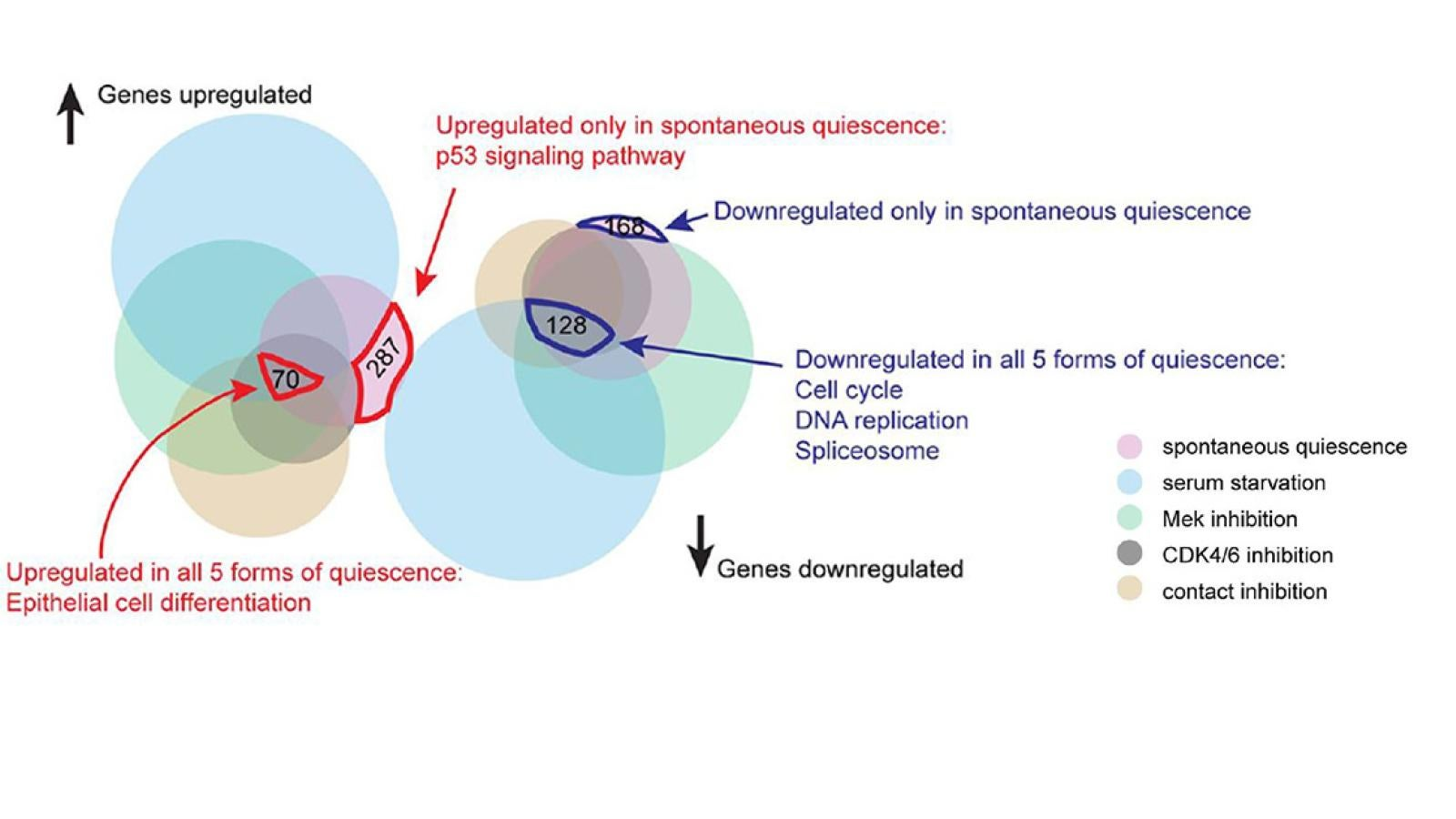 Venn diagram of gene sets differentially regulated in five forms of quiescence. Note: the area of each set does not strictly correlate with the number of genes contained within.