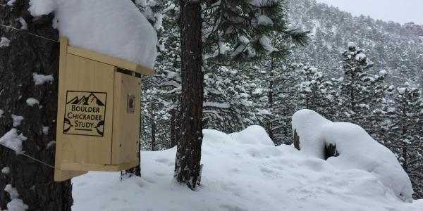 Chickadee Nest Box in the Snow