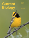 Cover of Current Biology - Lawrence's Warbler