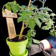 biodegradable sensor