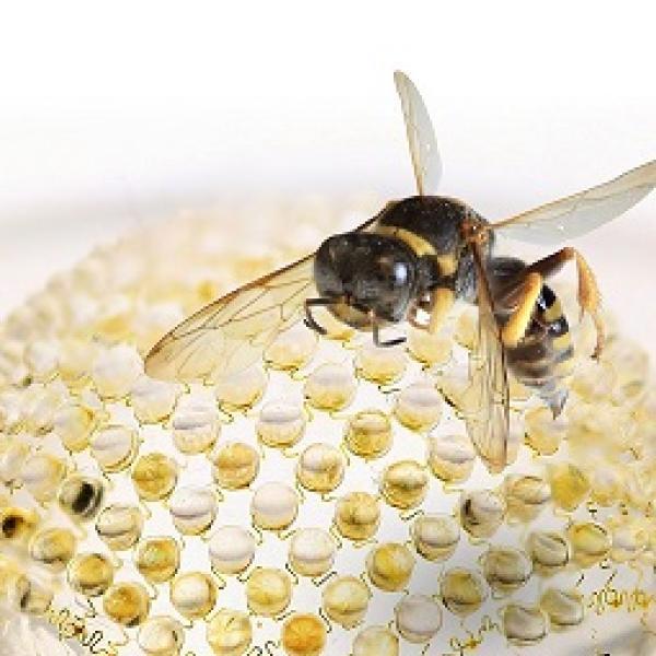 wasp on nanotechnology background
