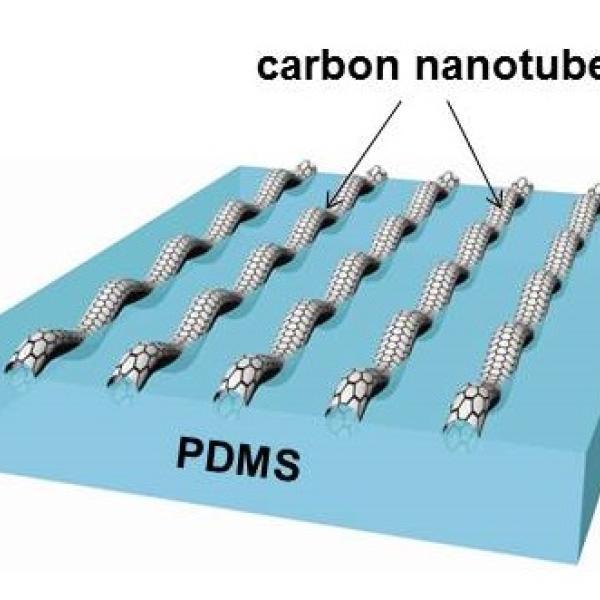 carbon nanotube buckling