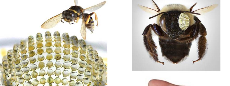Bio-inspired Bug Eye Camera