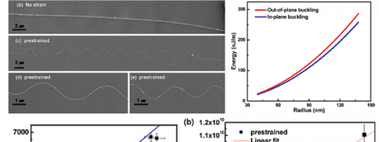 In-plane Buckling of Silicon Nanowires on Elastomers