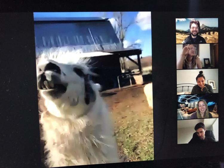 A virtual visit with farm animals on the last day of Professor Rabea Benhalim's Secured Transactions class.