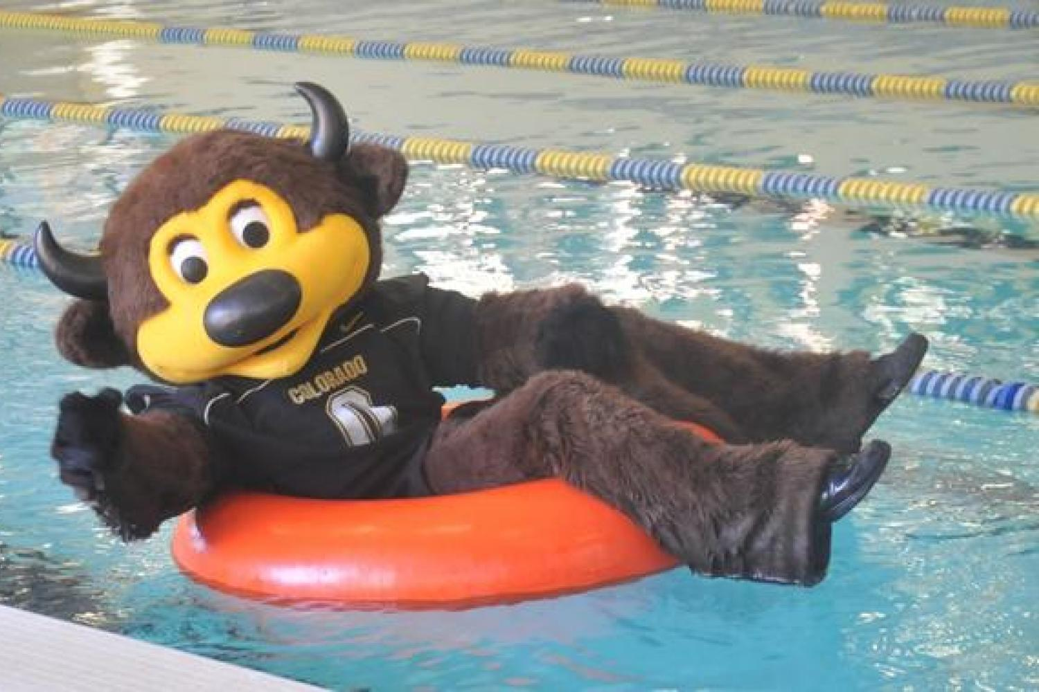 Chip has won best mascot in the nation twice