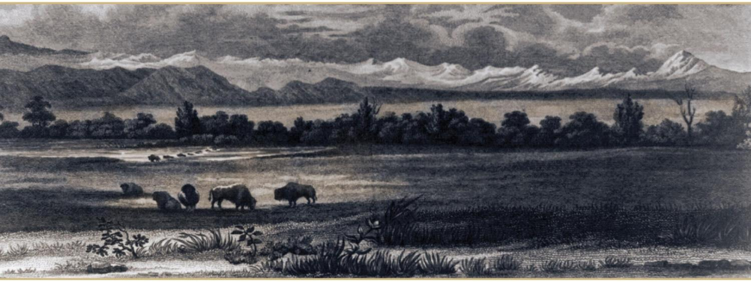 buffalo on an old landscape drawing of Colorado