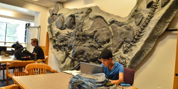 Student studying in the Earth Sciences Library