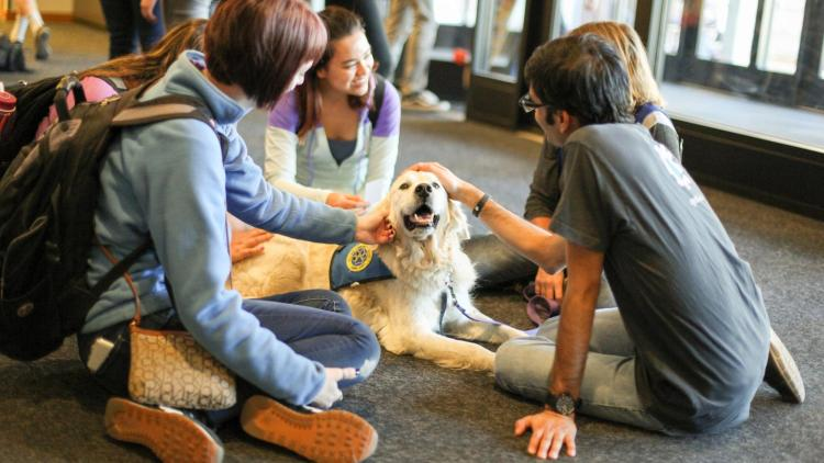 students petting a therapy dog at the library