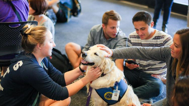 Therapy dog with students.