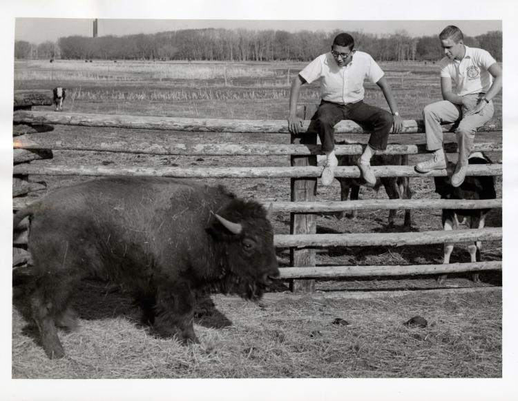 Ralphie archival image