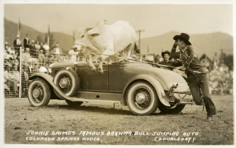 Rodeo performer Johnny Grimes jumping a Brahma bull over a car, Colorado Springs Rodeo, undated