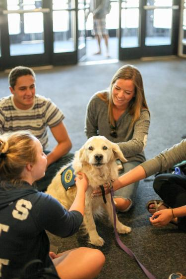 students take a study break with therapy dogs.