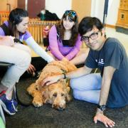 students and therapy dogs of Boulder County at Norlin Library