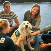 Therapy dogs at Norlin Library