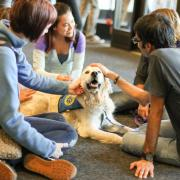 Therapy dogs like this one love attention.