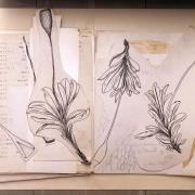 Drawings of flowers by Seville Flowers