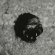 Nesting Bee