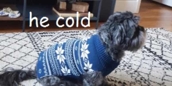 he cold