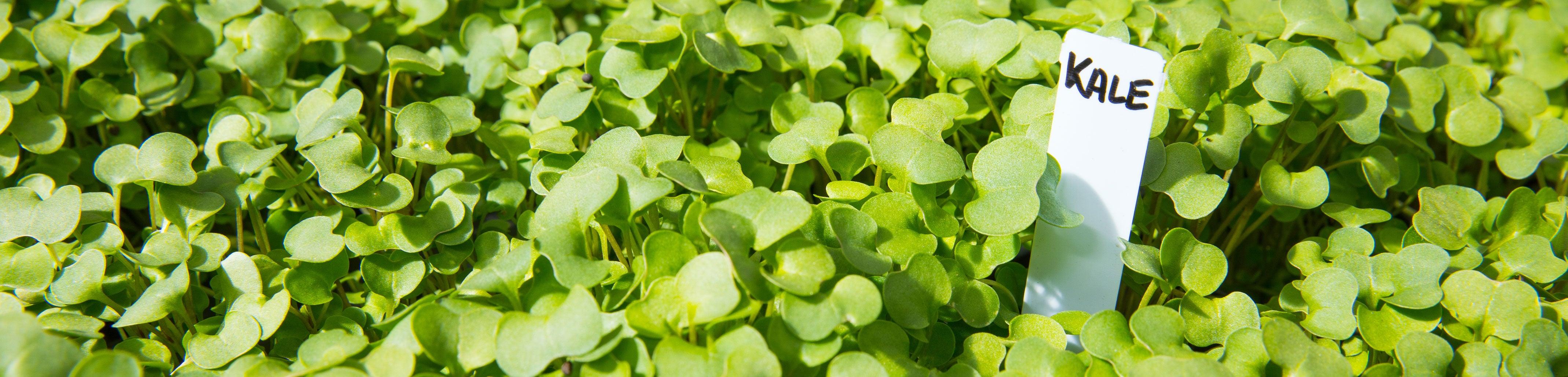 Village Center seedlings